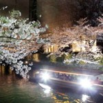 Boat proceeding along the canal under a row of illuminated cherry trees (March 29, Lake Biwa Canal, Sakyo Ward, Kyoto)