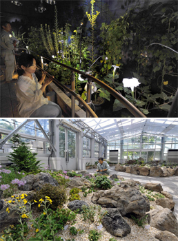 Photo= Flowers such as daturas emerge under the spotlights in the dimly-lit Night Flower Garden (upper photo), and the Alpine Garden, which opened at the same time (August 2, Kyoto Botanical Garden, Sakyo Ward, Kyoto)