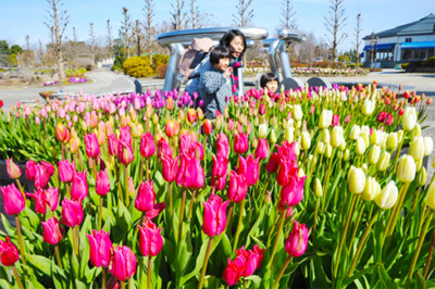 "Photo= A mother and children enjoy colorful ""ice tulips"" in full bloom (Aquatic Plants Garden Mizunomori, Oroshimo-cho, Kusatsu City, Shiga Prefecture)"