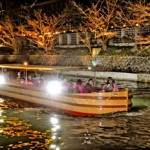 Photo= The boat proceeding under the illuminated cherry trees (Lake Biwa Canal, Sakyo Ward, Kyoto)