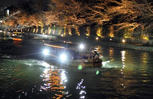 Photo= A boat proceeds slowly under an illuminated corridor of cherry blossoms (March 27, Lake Biwa Canal, Sakyo Ward, Kyoto)