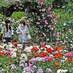 Photo= Garden visitors look around at roses in full bloom (May 18, Moriyama Rose and Herb Garden in Sazukawa-cho, Moriyama City)
