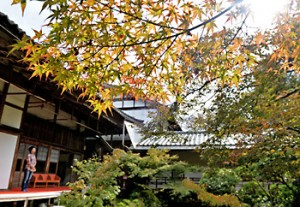 Photo= Maple leaves have begun to slightly change color (October 27, Jissoin Temple, Iwakura, Sakyo Ward, Kyoto)