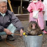 "Photo= ""Miwa"" taking a yuzu bath on the winter solstice (city zoo, Izaki, Fukuchiyama City, Kyoto Prefecture)"