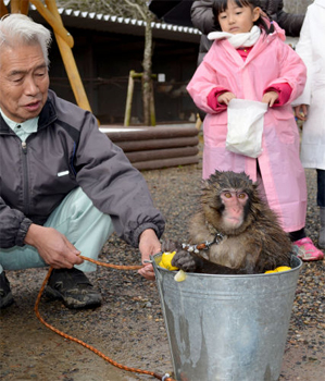 "Photo= ""Miwa"" taking a yuzu bath on the winter solstice (city zoo, Izaki, Fukuchiyama City, Kyoto Prefecture)"