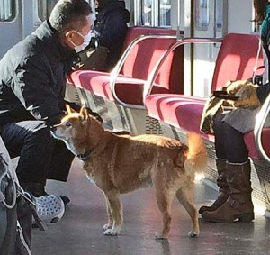 Photo= The dog which took a train from Kintetsu's Terada Station