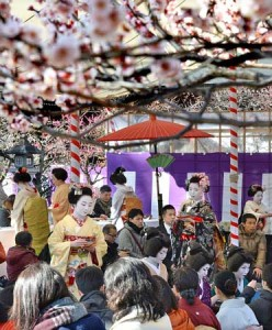 Photo= Visitors entertained with tea by Geiko and Maiko from Kamishichiken in the temple precincts where the plum blossoms are at their best (February 25, Kitano Tenmangu Shrine, Kamigyo Ward, Kyoto)