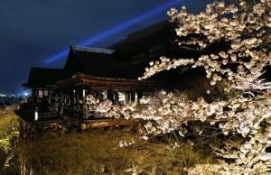 Photo= Illuminated full-bloomed night cherry blossoms emerge (April 3, Kiyomizu-dera Temple, Higashiyama Ward, Kyoto)