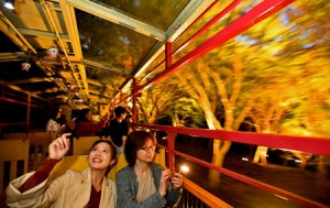 Photo= Passengers enjoy the illuminated scenery from a sightseeing train (October 14, Sakyo Ward, Kyoto)