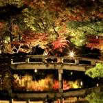 Photo= Autumnal foliage around Hojo-ike pond is illuminated in a test lighting (6:18 p.m., November 2, Eikando, Sakyo Ward, Kyoto)