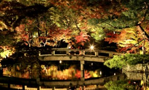 Photo= Autumnal foliage around Hojo-ike pond is illuminated in a test lighting (6:18 p.m., November 2, Eikando, Sakyo Ward, Kyoto)