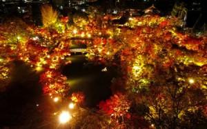 Photo= Autumn deepens. Clear air enhances the brilliantly illuminated autumnal garden even more (November 10, Eikando, Sakyo Ward, Kyoto) = shot via drone