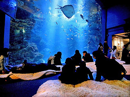 Photo= Visitors seated on the rugs and watching fish in the large tank. Some felt comfortable enough to even lie down (Kyoto Aquarium, Shimogyo Ward, Kyoto)