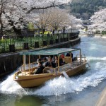 Photo= A Lake Biwa Canal cruise boat travels along while passengers on board enjoy cherry blossoms (March 28, Yamashina Ward, Kyoto City)