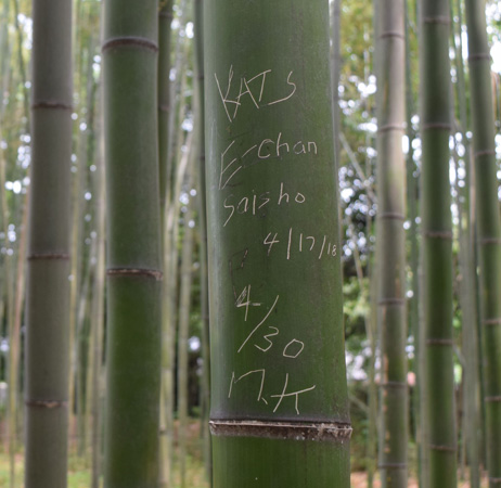Photo= A bamboo stalk with graffiti (Ukyo Ward, Kyoto)