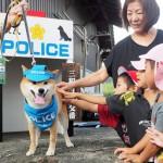 """Photo= The Shiba Inu dog """"Ayaka"""" was appointed """"Gakudo Keikai-ken"""" (Senzoku, Miwa-cho, Fukuchiyama City, Kyoto Prefecture)"""