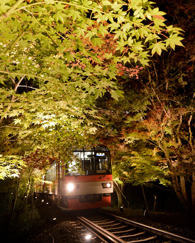 "A train running through the fantastically illuminated ""Maple Tree Tunnel"" (5:25 p.m., November 2, Sakyo Ward, Kyoto)"