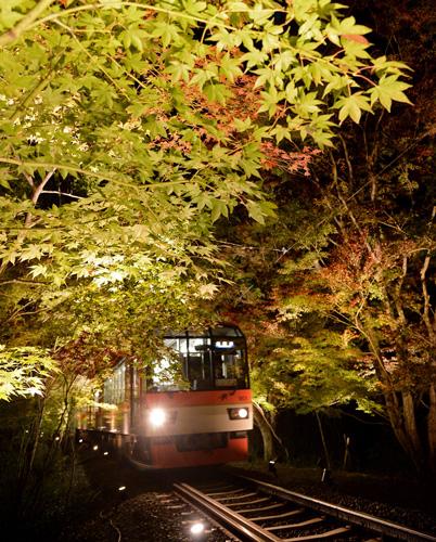 "A train running through the fantastically illuminated ""Maple Tree Tunnel"" (5:25 p.m., November 2, Sakyo Ward, Kyoto)"