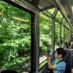 Passengers enjoying maple trees from the windows of an Eizan Railway train (Sakyo Ward, Kyoto)